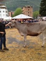 Fiera Valle Camonica 2015