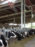 Il paradiso estivo delle vacche